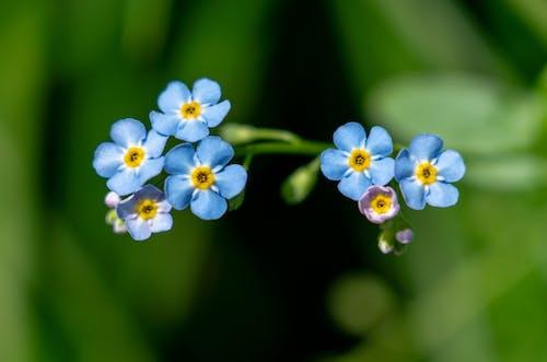 Free stock photo of beatiful flower, beautiful flower, blue