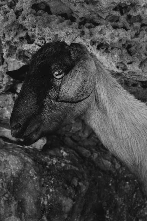 Foto profissional grátis de animais selvagens, animal, ao ar livre