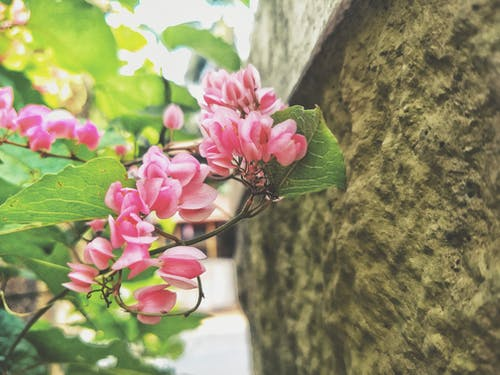 Fotos de stock gratuitas de flores bonitas