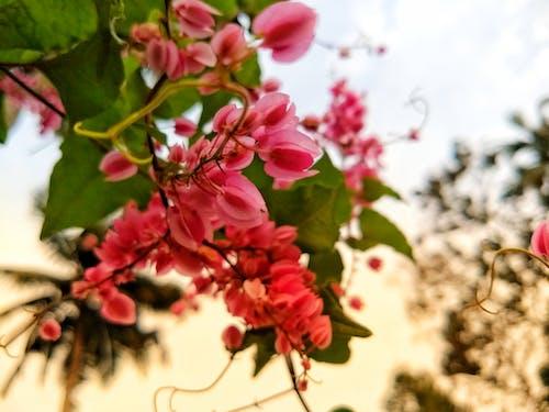Foto profissional grátis de flores bonitas, luz do sol