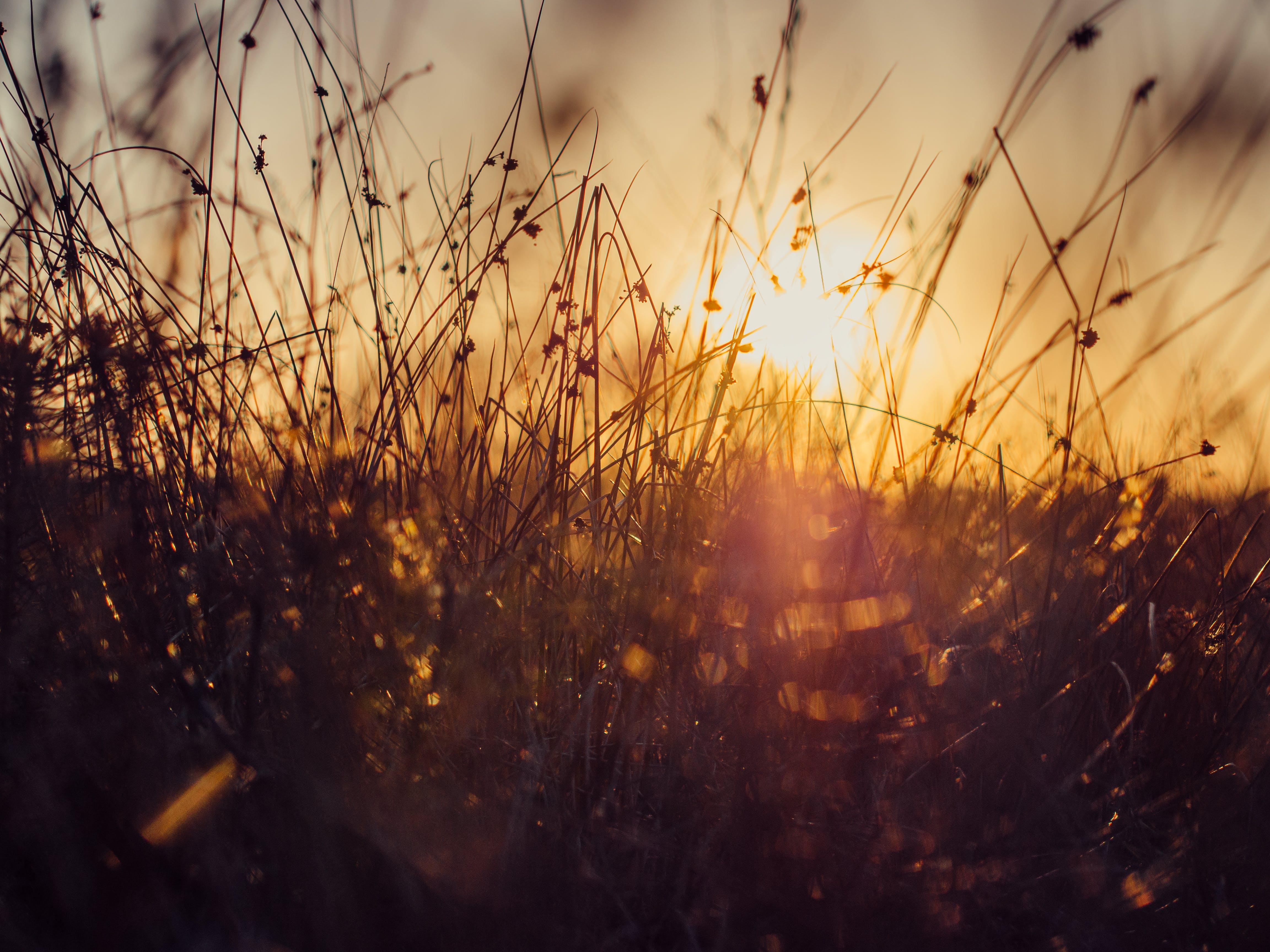 fű, nap, naplemente