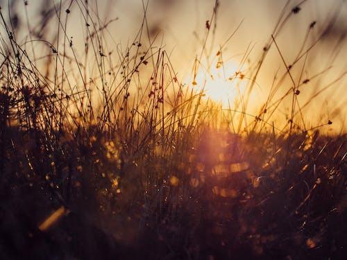 çayır, çim, doğa, gün batımı içeren Ücretsiz stok fotoğraf