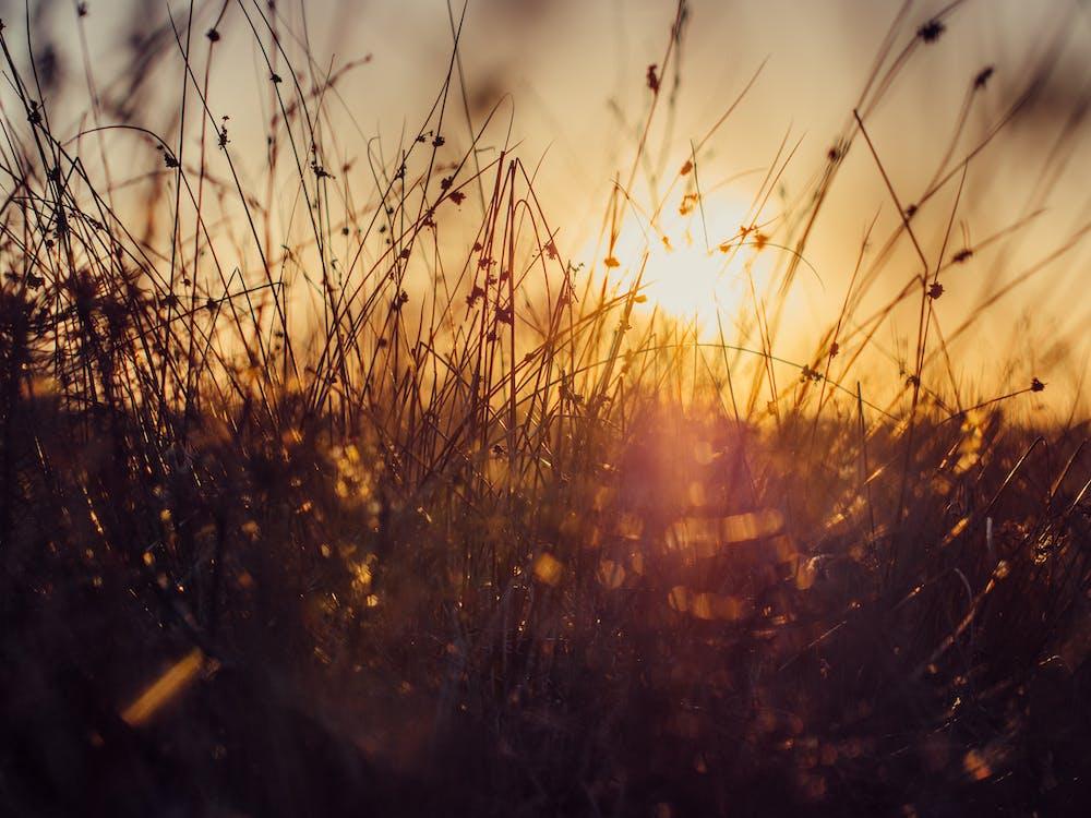 natura, słońce, trawa