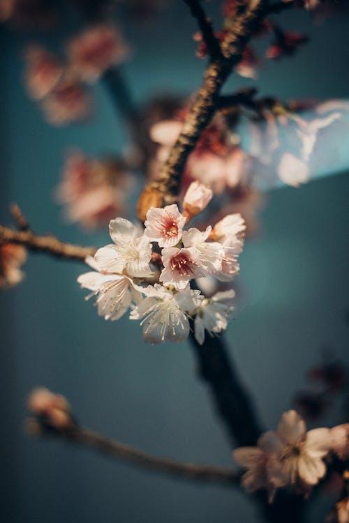 シーズン, フローラ, 低木の無料の写真素材