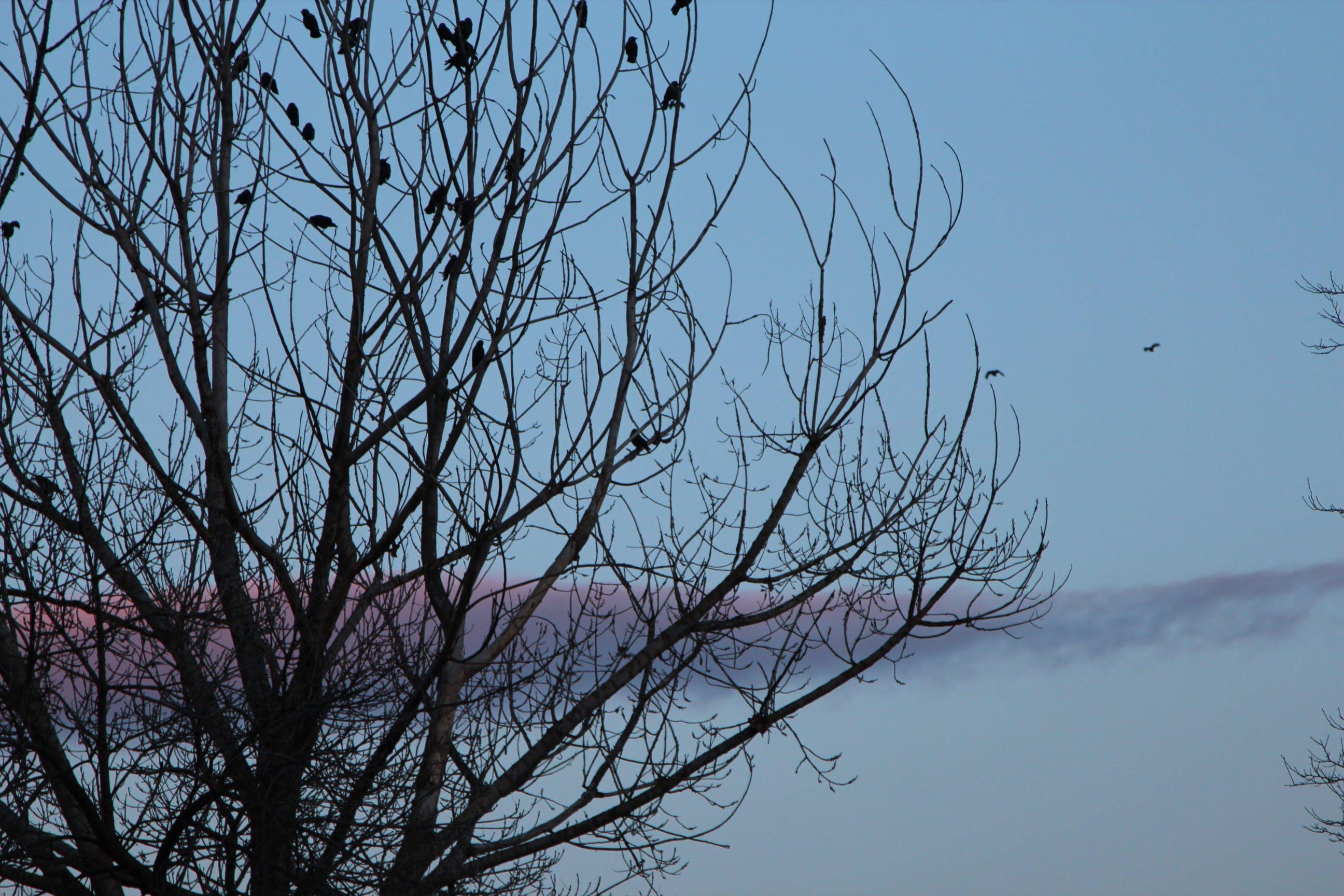 Free stock photo of #Nature #Winter #Sunshine #Sky #Bird