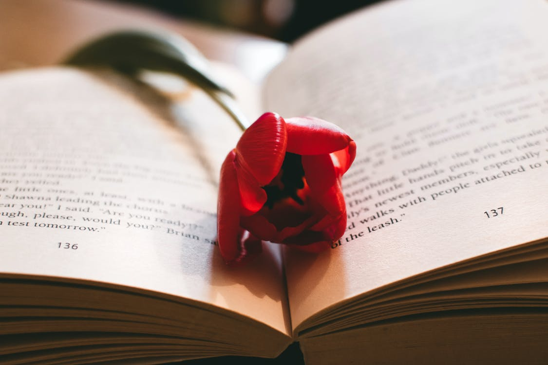 Red Petaled Flower Between the Book Page