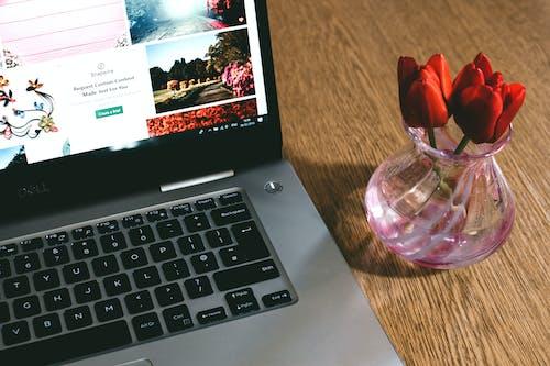 Gratis arkivbilde med blomster, blomsterblad, bærbar, bærbar datamaskin