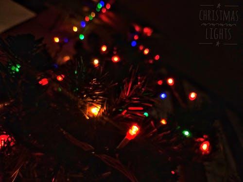 Gratis arkivbilde med julelys