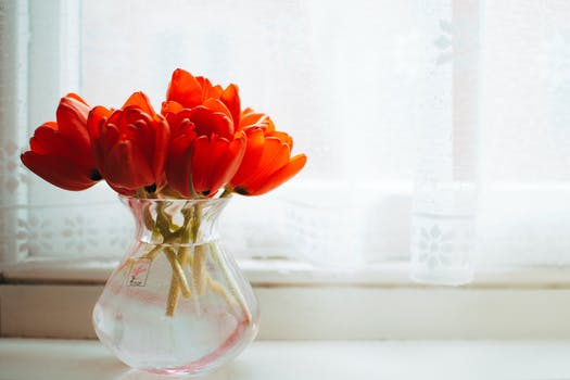 Red Tulips In Clear Gl Vase With Water Centerpiece Near White Curtain