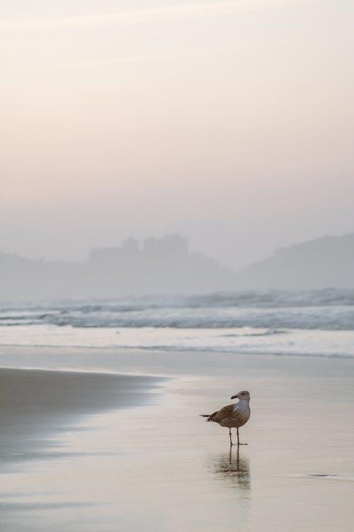 Gratis lagerfoto af brasilien, fugl, hav