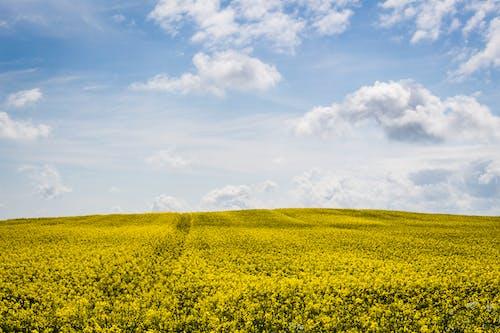 Kostnadsfri bild av åkermark, bondgård, dagtid, fält