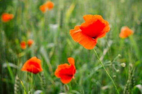 Foto d'estoc gratuïta de brillant, brots, colors, creixement