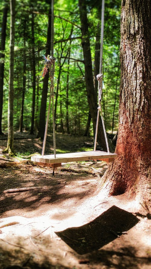 Free stock photo of forest, rope swing, swing