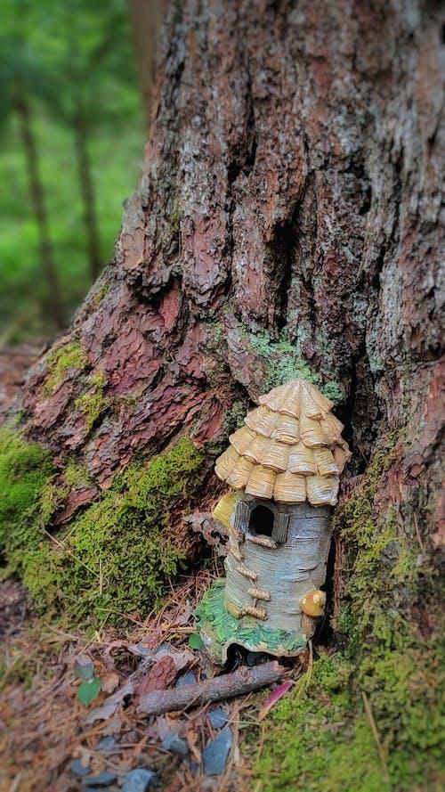 Free stock photo of fairies, fairy door, forest floor