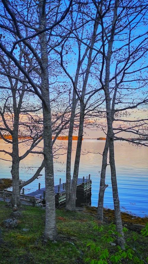 Free stock photo of cove, dusk, jetty