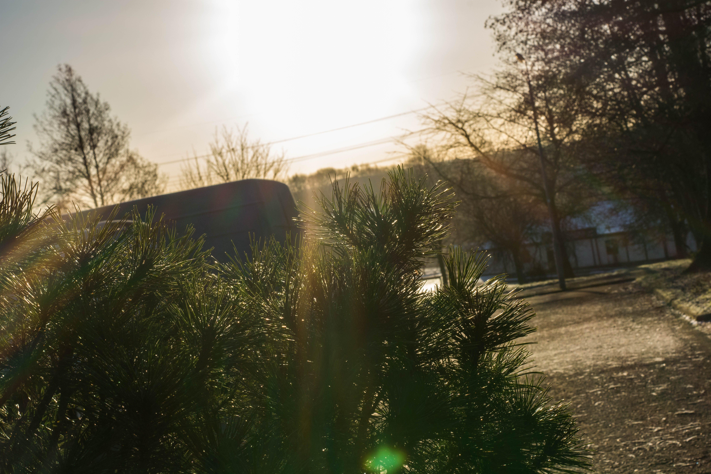 Free stock photo of bush, cool, epic, evening sun