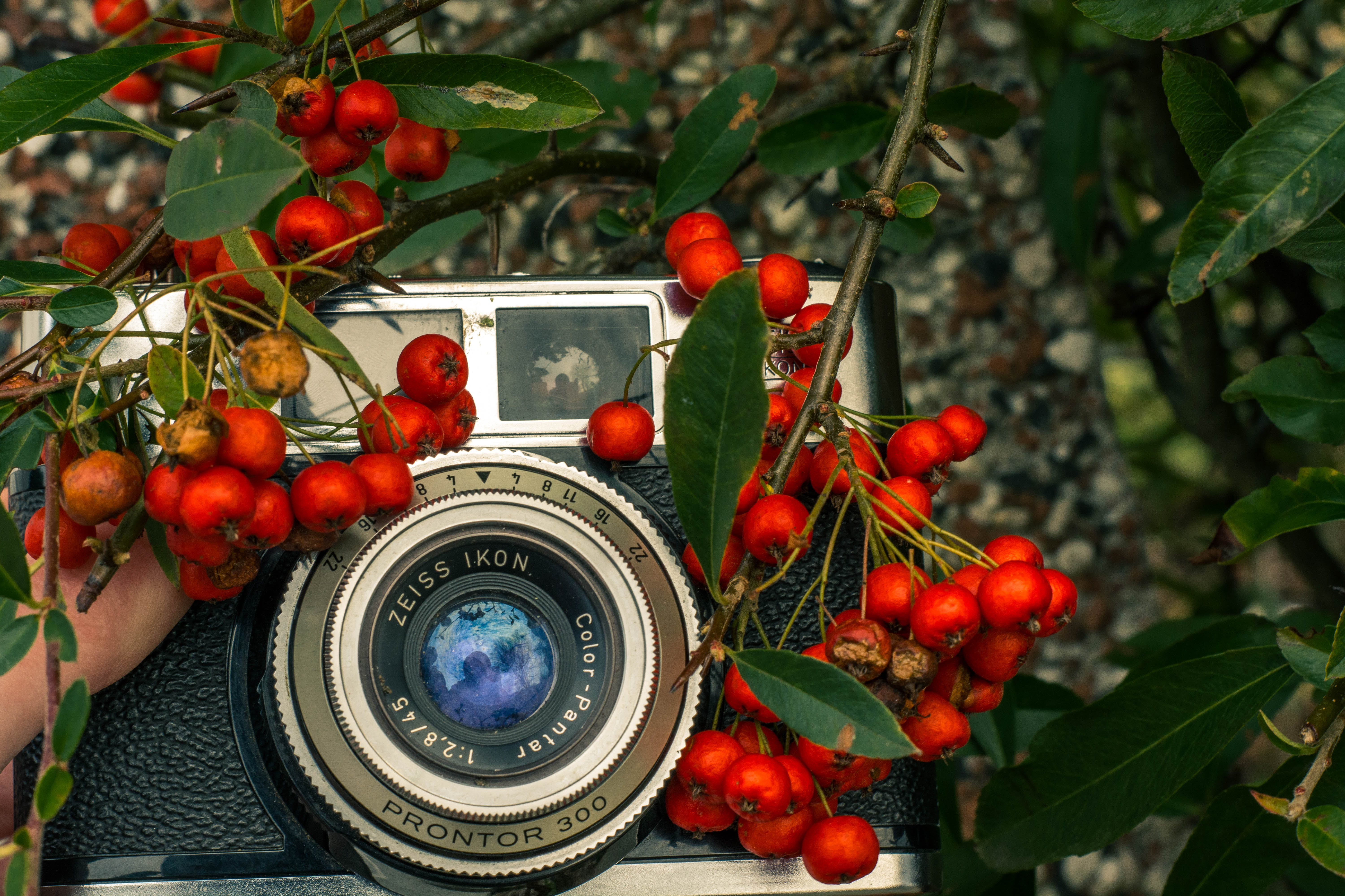 Free stock photo of awesome, berries, camera, cool
