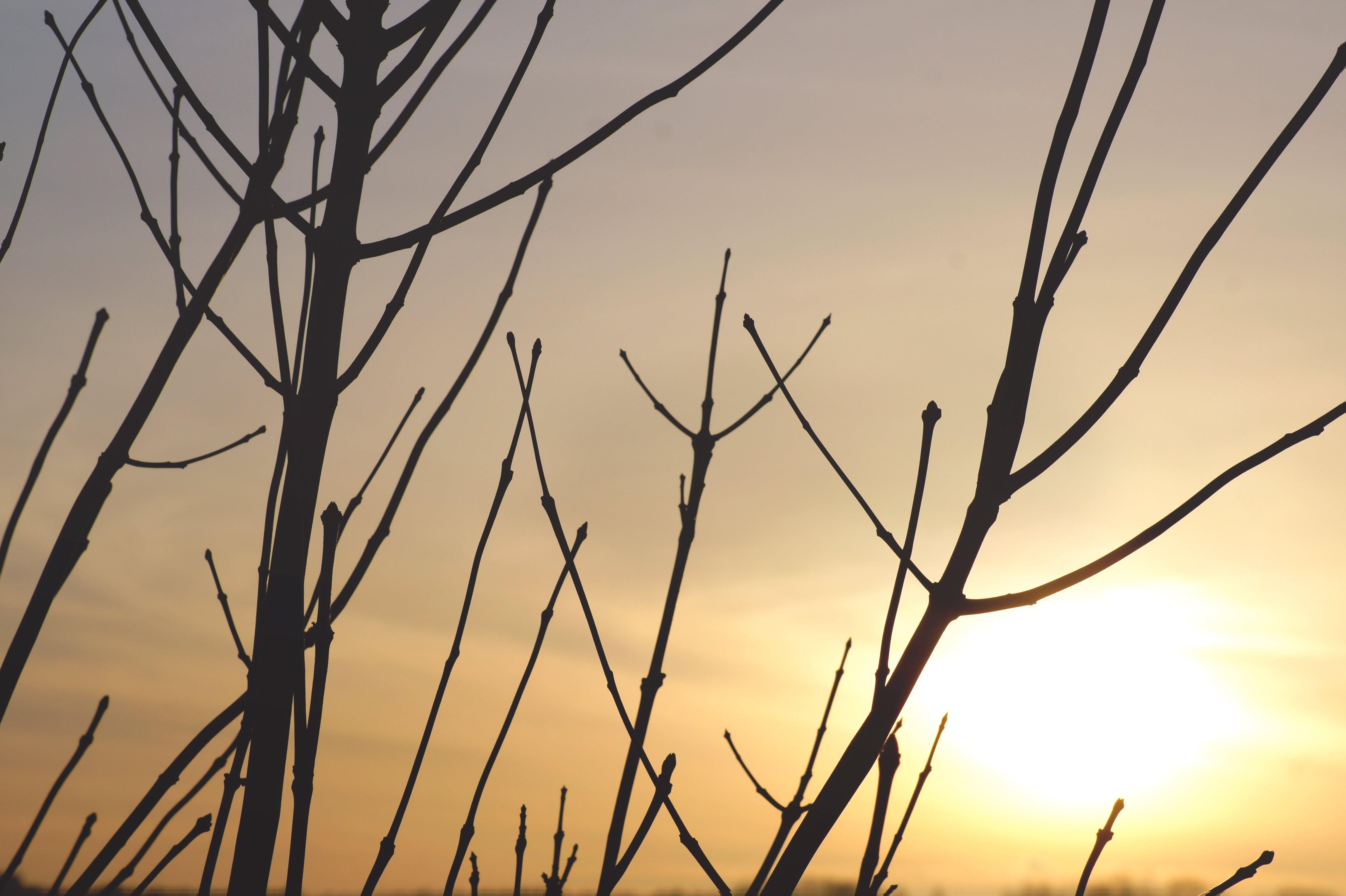 Free stock photo of backlit, dawn, dusk, evening