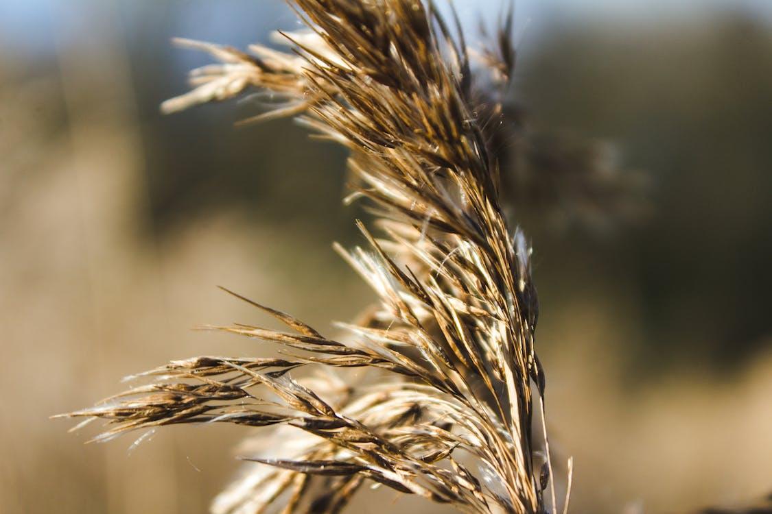 곡물, 대자연, 밀