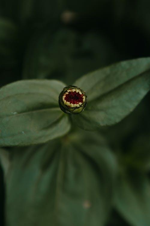 Free stock photo of biology, blur, bright