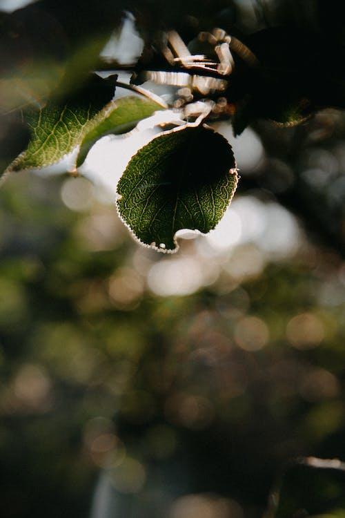 Free stock photo of apple, blur, branch