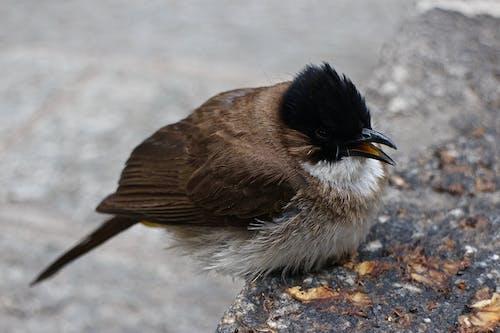 Close-up Shot of a Songbird