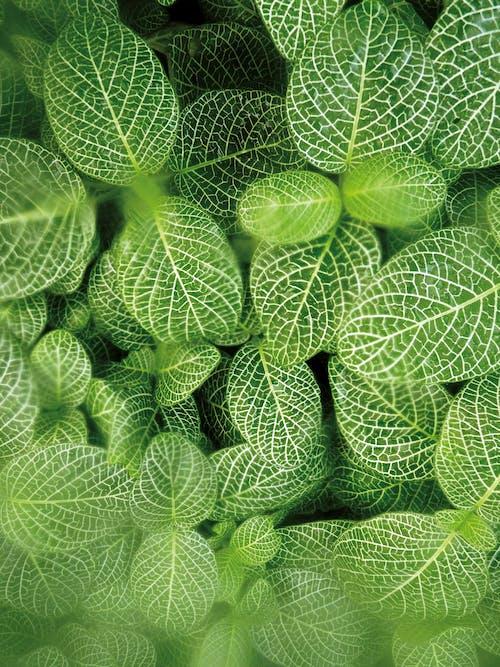Ilmainen kuvapankkikuva tunnisteilla kasvi, kasvu, kirkas