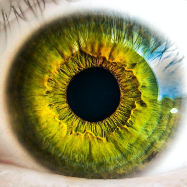 anatomy, biology, eye
