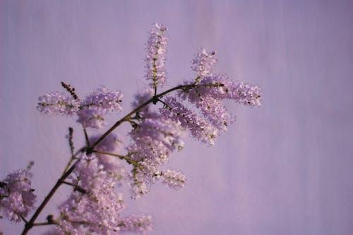 Бесплатное стоковое фото с ветвь, вишня, дерево