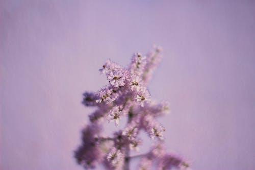 Бесплатное стоковое фото с ветвь, дерево, зима