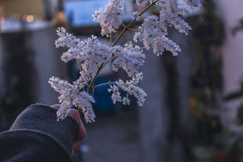 Бесплатное стоковое фото с ветвь, глубина резкости, дерево