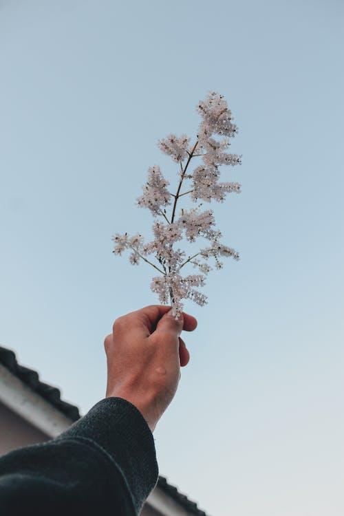 Бесплатное стоковое фото с ветвь, голубое небо, дерево