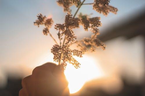 Бесплатное стоковое фото с дерево, закат, зима