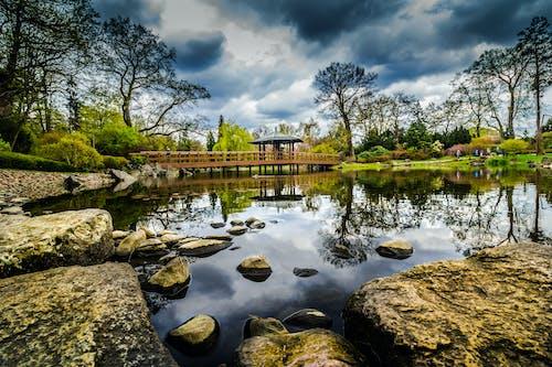 公園, 天性, 池塘 的 免費圖庫相片