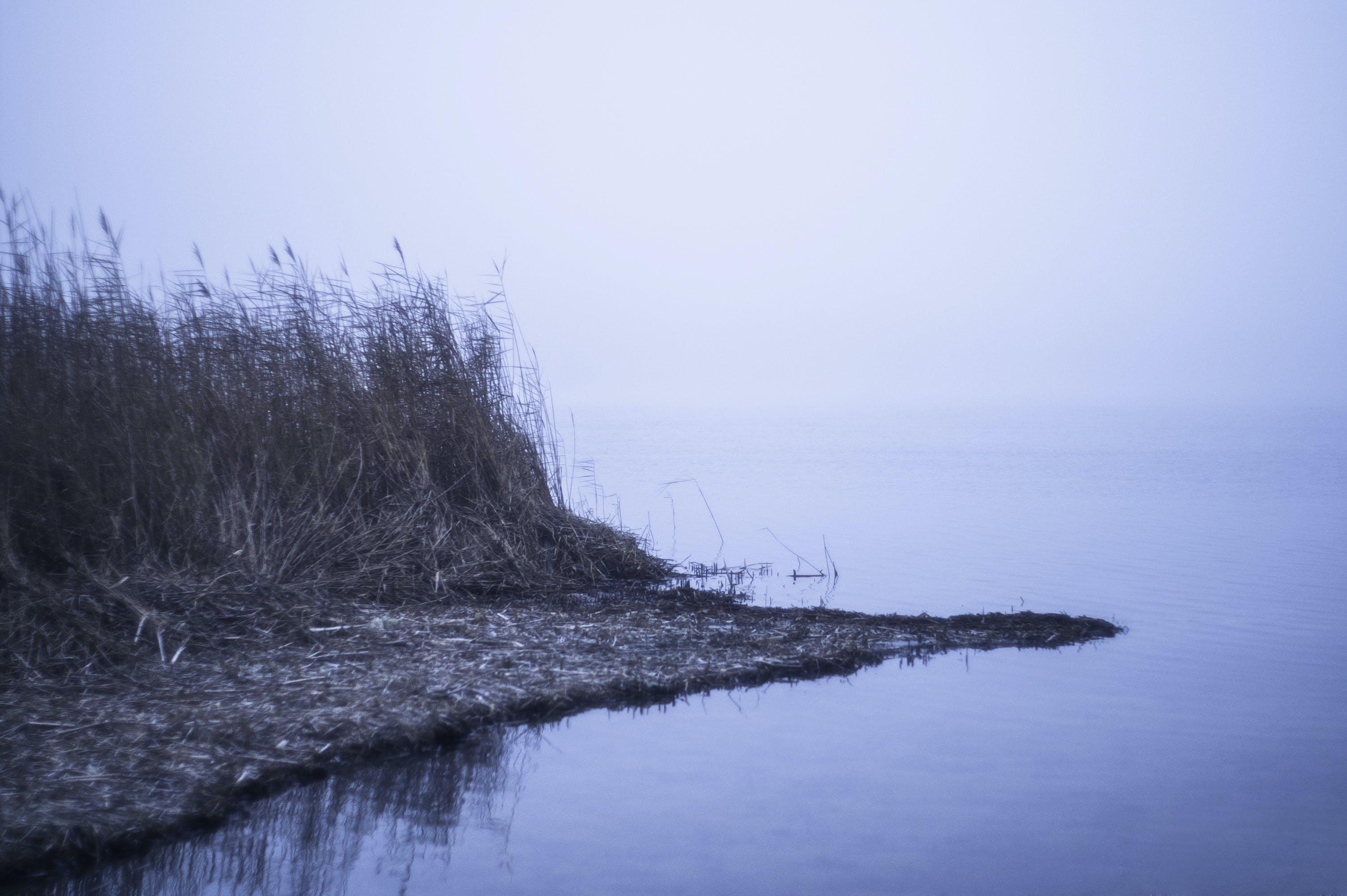 Free stock photo of water, fog, lake