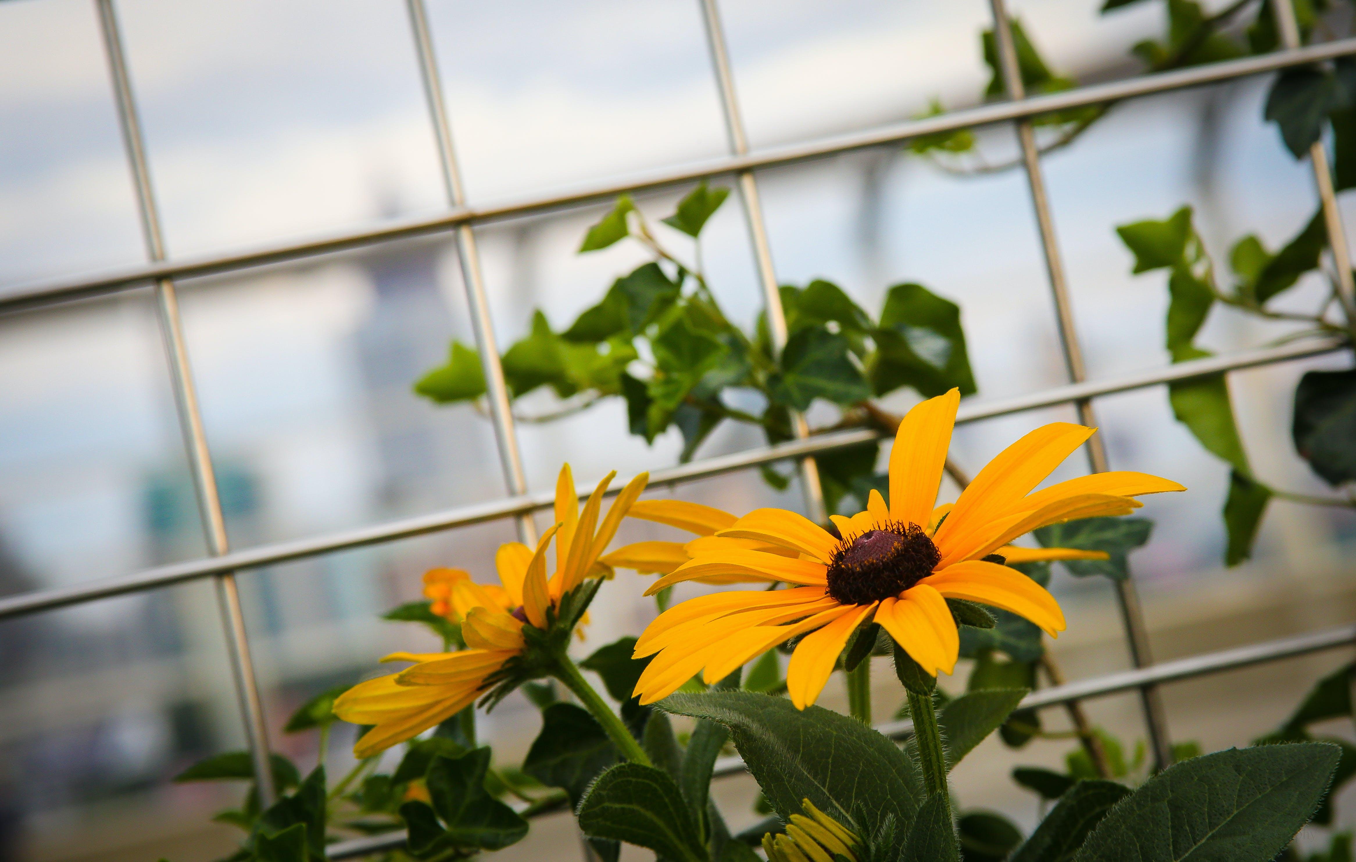 Free stock photo of Atl, atlanta, beautiful flowers, city