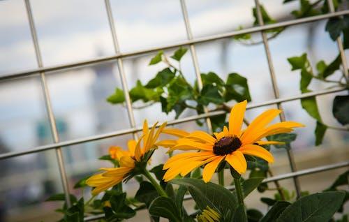 Δωρεάν στοκ φωτογραφιών με atl, atlanta, κίτρινη, λουλούδι