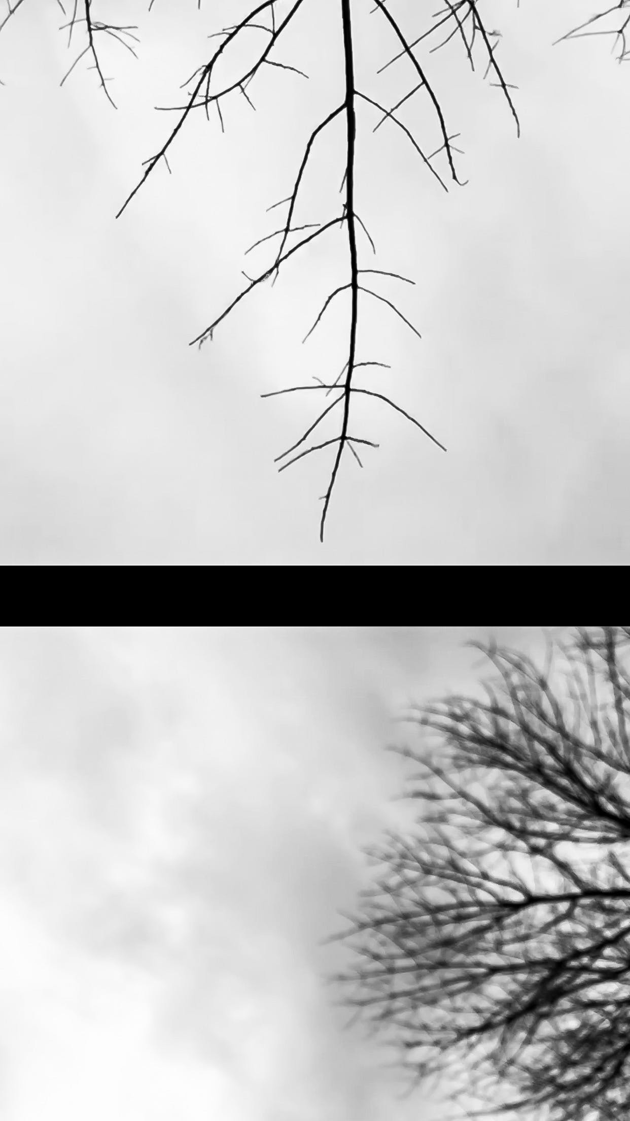 Free stock photo of art, black and white, Close and Far, cloudy skies
