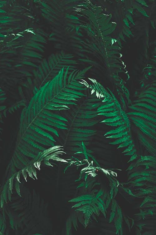 Close-Up Shot of Fern Leaves