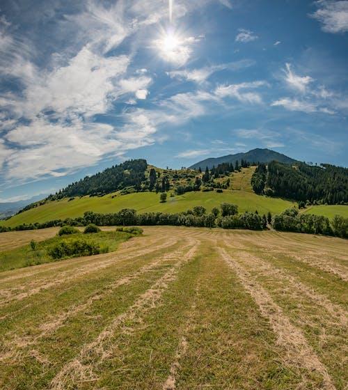 Ingyenes stockfotó domb, fa, farm témában