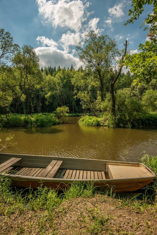 Ingyenes stockfotó biliárd, fa, folyó témában