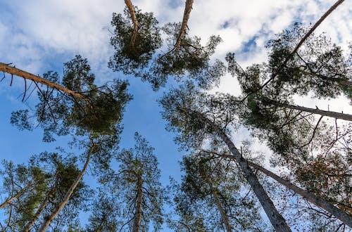 Ingyenes stockfotó alacsony szög lövés, erdő, fák témában