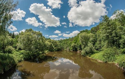 Ingyenes stockfotó fa, folyó, fű témában