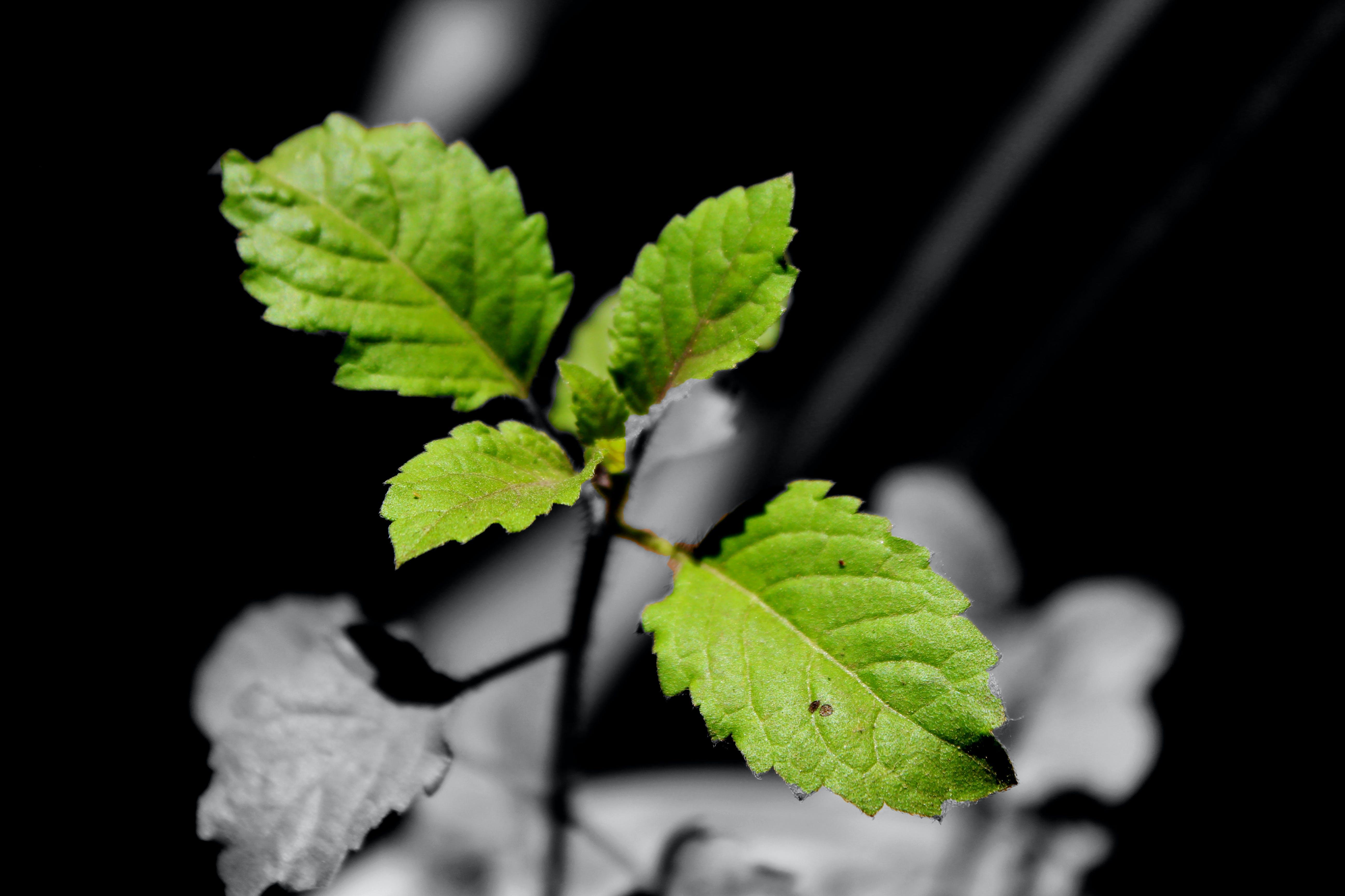 Free stock photo of #black, #blur, #foucs, #grenn