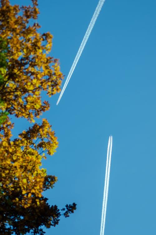 คลังภาพถ่ายฟรี ของ blã¤tter, blau, blauer ท้องฟ้า, dã¼senflugzeug