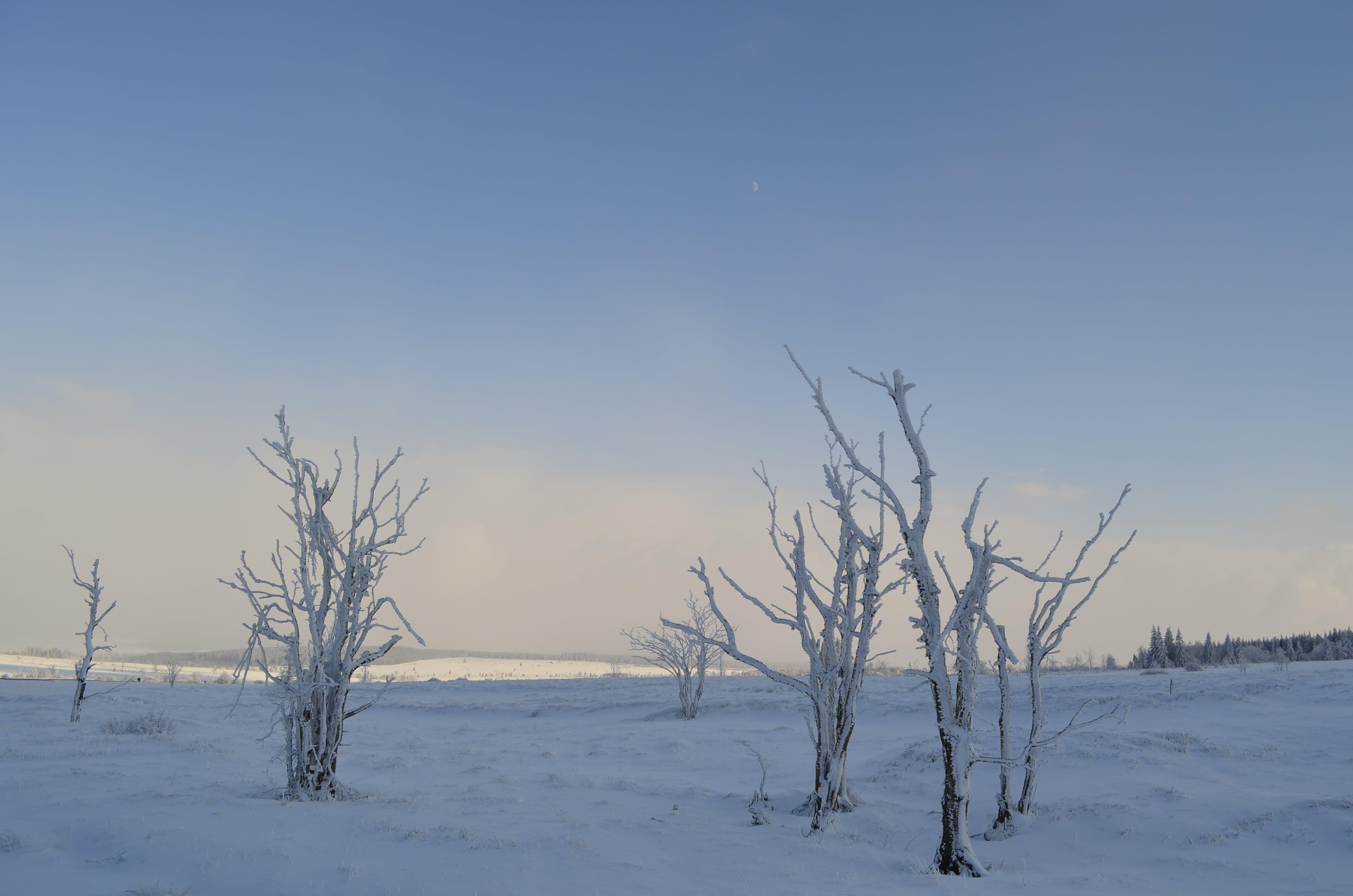 Kostenloses Stock Foto zu blau, eis, frost, gefroren