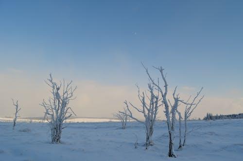 คลังภาพถ่ายฟรี ของ baã¼me, blau, eis, gefroren