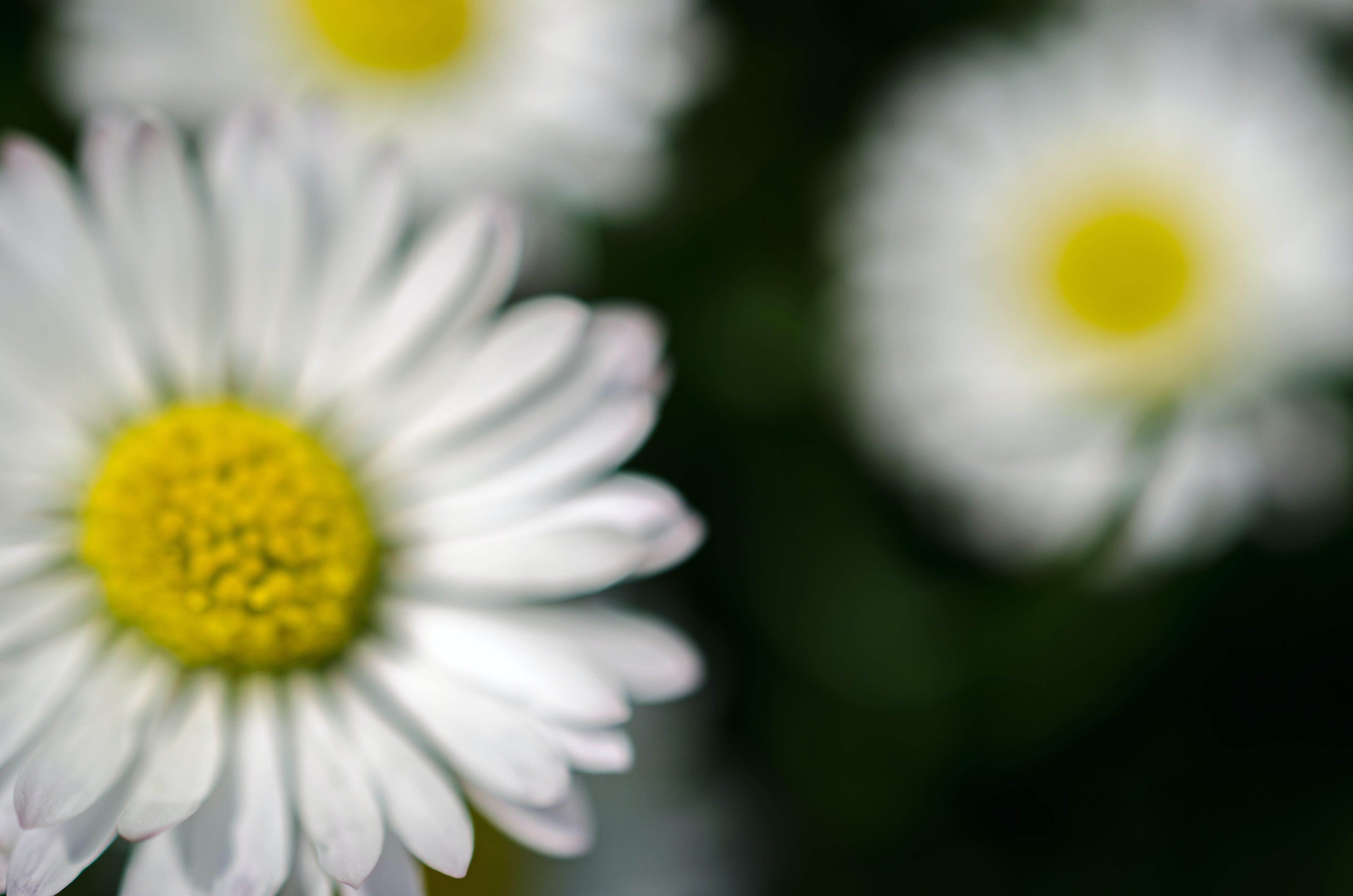 Kostenloses Stock Foto zu blühen, blüte, blume, frühling