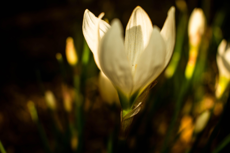 Free stock photo of beautiful, closeup, flower, garden