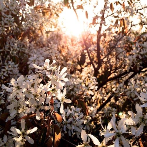 樹, 陽光 的 免費圖庫相片